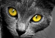 katzenaugen kontaktlinsen ein tierischer eyecatcher. Black Bedroom Furniture Sets. Home Design Ideas